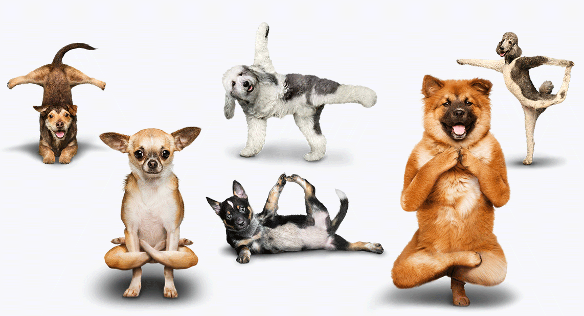 Take two down dogs - what yoga therapy isn't
